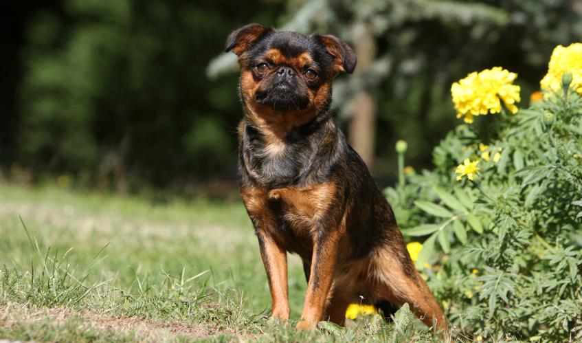 Ein Hund erledigt sein Geschäft im Freiem