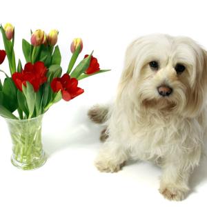 hund-vase-teaser