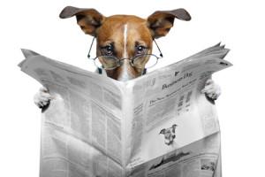hund liest zeitung