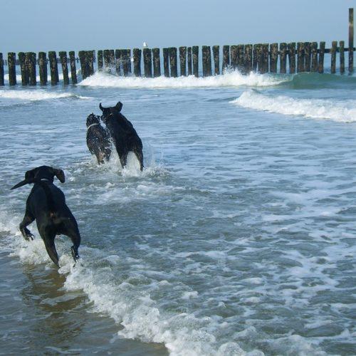Wassergewöhnung/ Schwimmtraining für Welpen und ältere Hunde