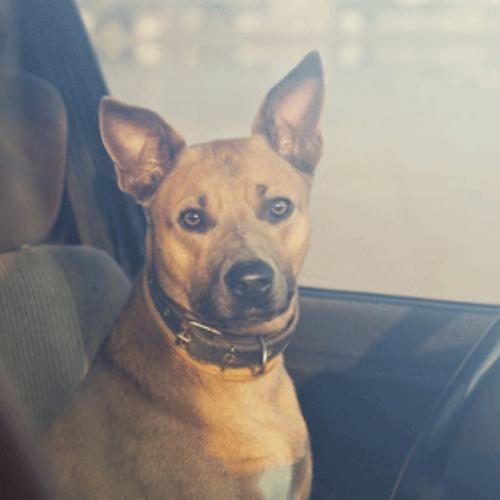 Hund im Auto – Sommerhitze –