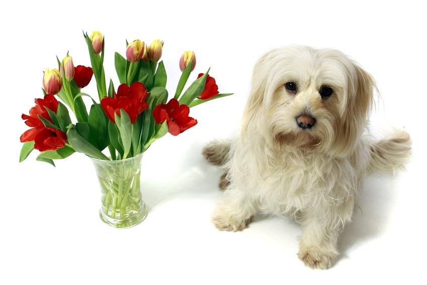 kleiner Hund mit Blumen