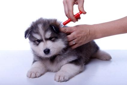 ungiftiges zeckenmittel für hunde