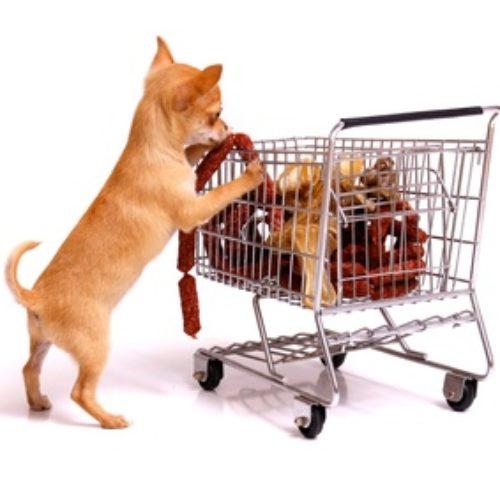 Welches Hundefutter ist das Richtige?
