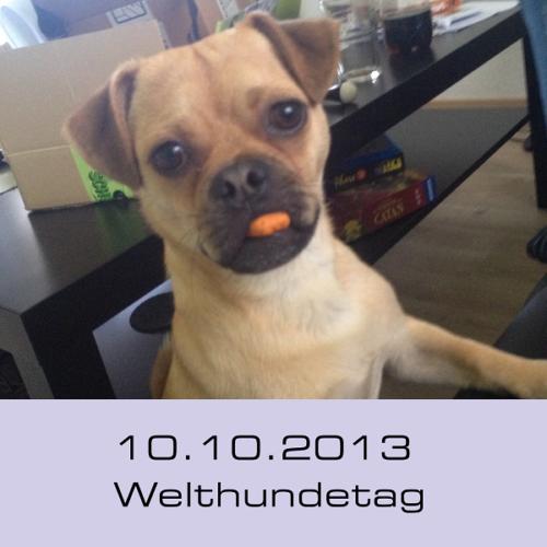Heute ist Welthundetag 2013