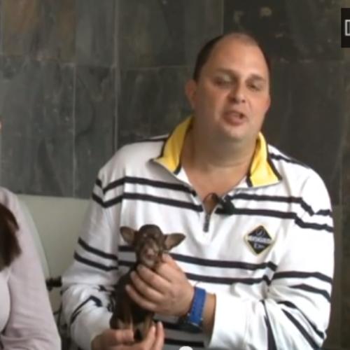 Kleinster Hund der Welt 2013/2014