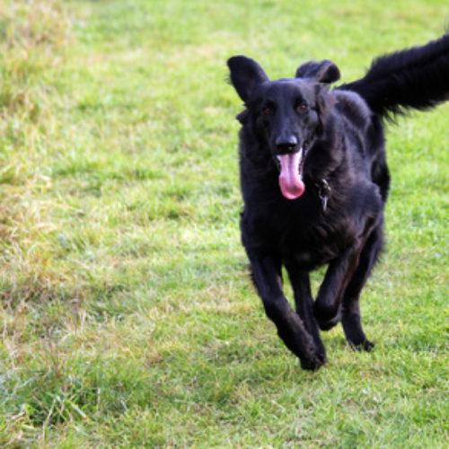 Hundesport – Mantrailing