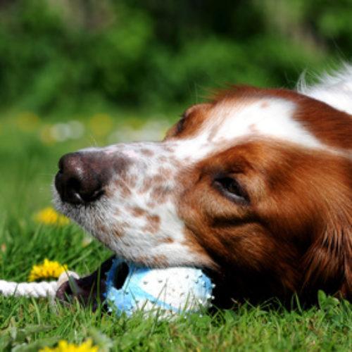 Hundespielzeug – Apportieren, kuscheln, kauen