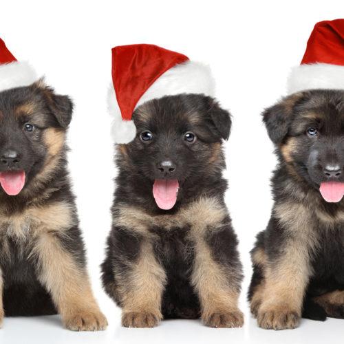 Weihnachten mit dem Hund