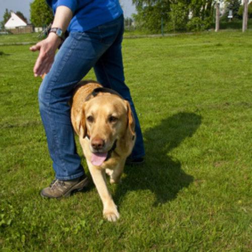 Hundesport – Dogdancing