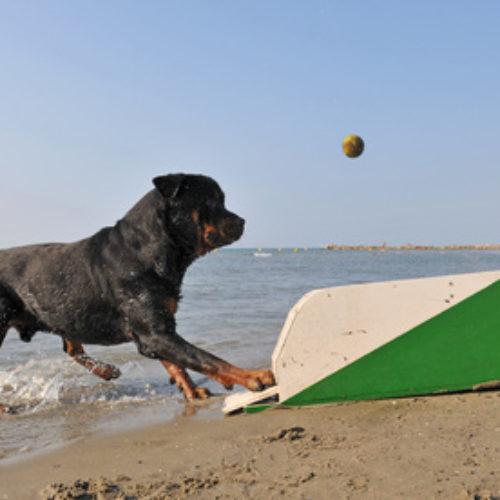 Hundesport – Flyball