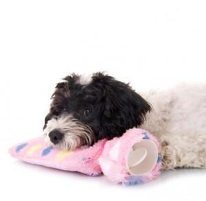 Kleiner Hund mit Wärmeflasche