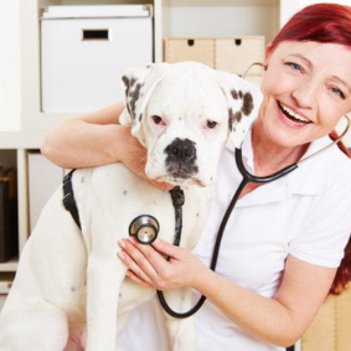 Die Wahl des Tierarztes