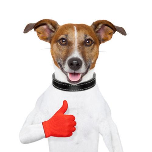 Beliebteste Hunderassen 2014