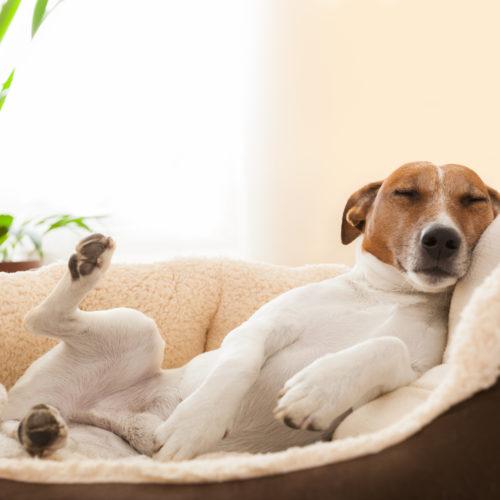 Der richtige Schlafplatz für den Hund