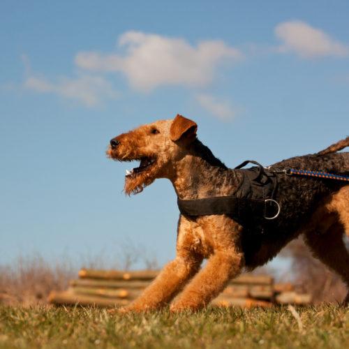 Die Schleppleine für den Hund