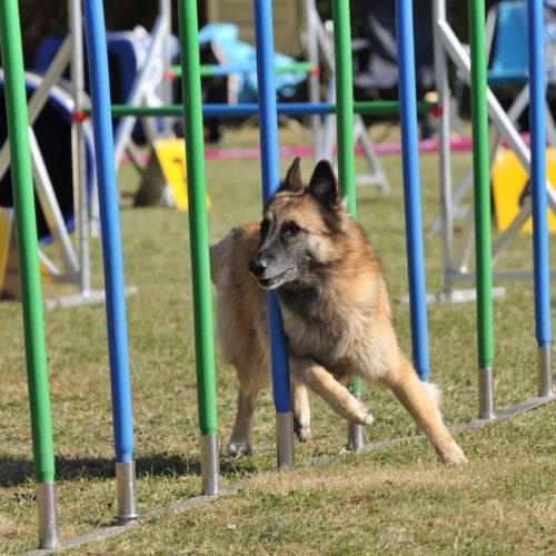 Hundesport: Turnierhundesport