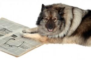 Hund mit Tageszeitung