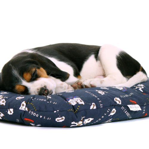 Hundekissen: Ob groß, ob klein – bequem muss es sein