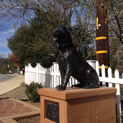 Unnützes Wissen: Hund Bosco war von 1981 bis 1994 Bürgermeister der Stadt Sunol