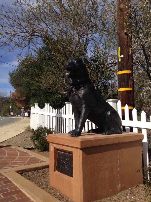 Bosco_the_Dog_Mayor_of_Sunol