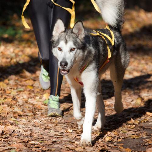 Hundesport: Canicross