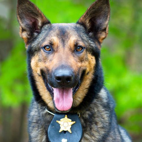 Brut- und Setzzeit – Leinenpflicht für Hunde