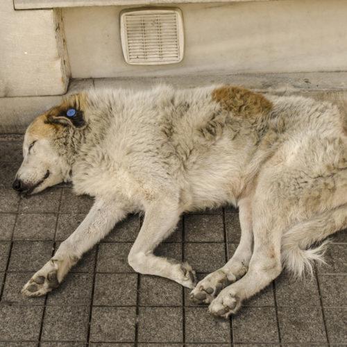 WARUM diese Hunde so grausam STERBEN mussten?