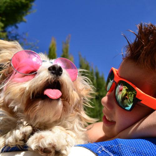 Sommerurlaub mit dem Hund