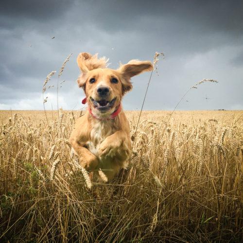 Ulmenrinde für Hund und Katze – Wofür ist es wichtig?